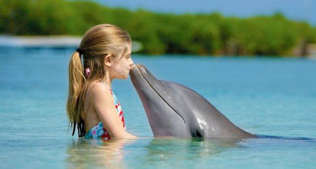 118-dolphine